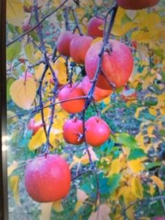 りんごの里です☆