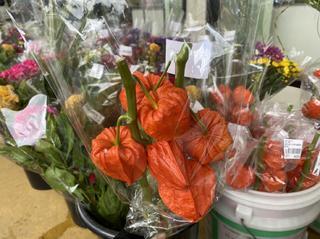 盆の飾り花「ほおずき」