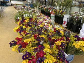 切り花コーナー