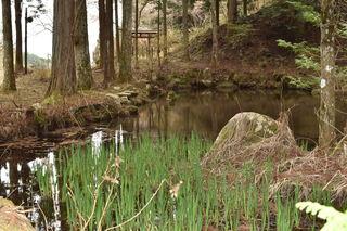 境内の池 5~6月にはモリアオガエルの卵が見つけられるかも