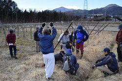 梨のジョイント栽培園での作業