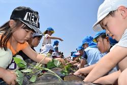 大きな穴を掘り苗を植える園児たち
