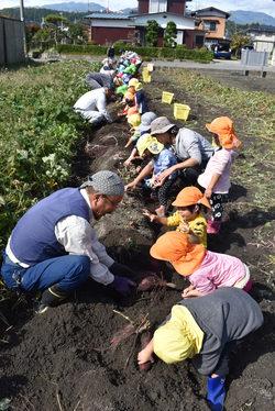 園児と芋ほりを楽しむあすなろ農園のメンバー