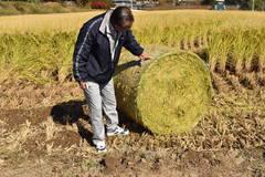 稲WCS生産利用実証研究会/飼料用米試験栽培2年目の取組み