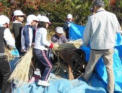 小学生が昔ながらの脱穀作業を体験