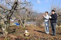 市田柿の剪定講習会を実施/伝統行事「成り木責め」も