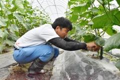 初めて味わう収穫の喜び JAみなみ信州担い手就農研修制度研修生
