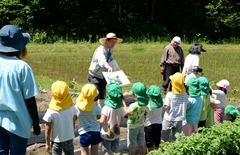 JA・地域で行う食農教育 上久堅保育園のさつま芋の苗植え体験