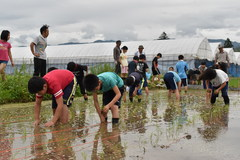 竜丘小学校5年生 自ら考える稲作授業