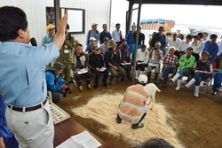 熱気あふれるセリが行われた子山羊市場