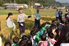 保護者も参加して園児が稲刈り体験