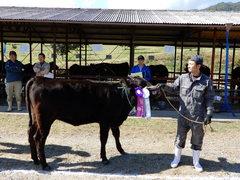 JAみなみ信州畜産共進会を開催(肉用牛種牛の部)関島さんが初出品で最優秀賞