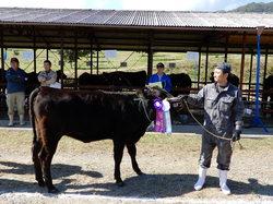 最優秀賞を受賞した種牛と関島さん