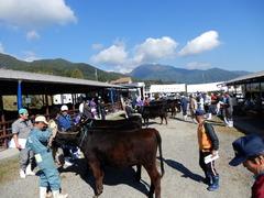 飯田市の小原さんが3年連続4回目の最優秀賞  第21回畜産共進会・肉牛の部