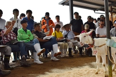 【お知らせ】第70回子山羊市場開催のお知らせ