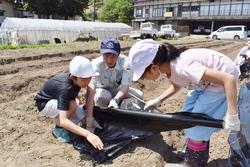 協力して定植作業を行う児童たち
