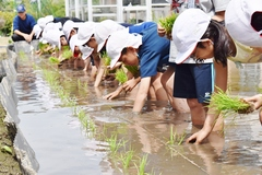 小学校のたんぼ作りをJA青年部が支援