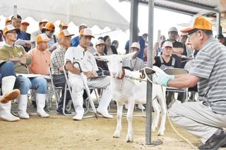 賑わう子山羊の競り会場