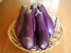 【直売所】およりてふぁーむ 伝統野菜フェアを開催します