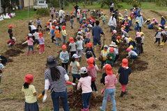 青年部伊賀良支部 保育園児とサツマイモ掘り