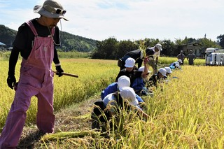 青年の会会員の指導を受け稲刈りをする児童