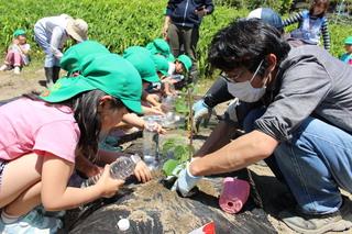 青年部員とキュウリを植える園児たち