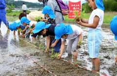 【NEWS】JAと園児で田植え/収穫米は福祉施設へ寄贈