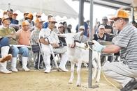 第72回子山羊市場開催のお知らせ