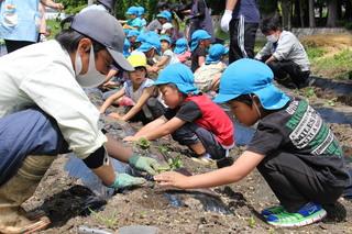 青年部員と苗植えをする園児たち