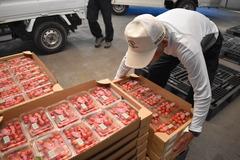 【NEWS】生産者の販路に協力 さくらんぼの市場出荷