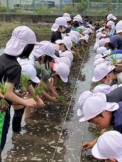 【NEWS】丸山小学校 もみ種の浸水からチャレンジした田植え