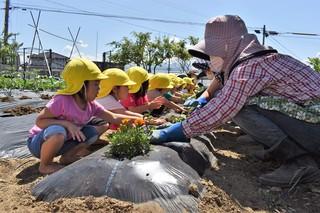 さくらの会と苗植え作業を行う園児