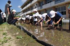 【NEWS】JA青年部山本支部 地元小学校の田んぼづくり支援