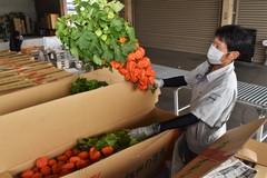 【NEWS】盆飾り需要 ホオズキ出荷始まる