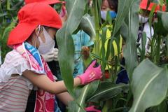 【NEWS】三穂盛年の会の食育事業 コロナ禍を乗り越え子供らととうもろこし収穫