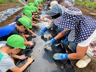 大根の種を植える園児たち