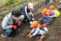 【NEWS】JA青年部伊賀良支部 伊賀良保育園園児とさつまいも収穫
