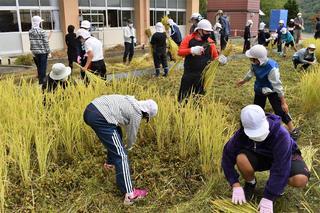みんなで協力して行う稲刈り作業