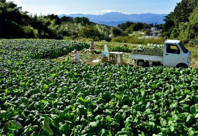 10-3.広い畑夫婦で収穫.png
