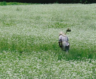 6-5.一面に咲くそばの花.png
