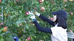【NEWS】農業マッチングアプリを利用した求人がスタート