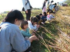 【NEWS】三穂盛年の会食育事業 三穂保育園とそばの収穫