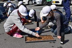【NEWS】昔ながらの農作業を 喬木村立第1小学校のもみまき