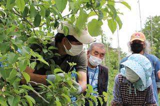 りんごの摘果の指導を受ける同センター会員