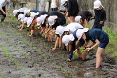 【NEWS】裸足で泥を感じて 丸山小5年生が田植え