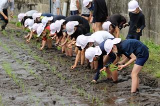 ひとつずつ丁寧に田植えをする児童たち