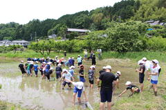 【NEWS】上郷小10年ぶりの米作り JAと地域が支援