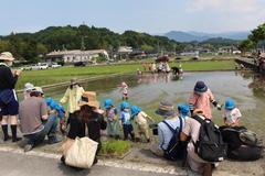 【NEWS】お米づくり体験 川路保育園で田植え