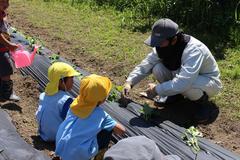 【NEWS】地域に支えられながら サツマイモの苗植え