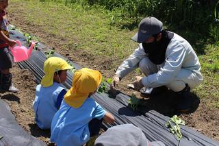 青年部員と一緒にサツマイモの苗を植える子供たち